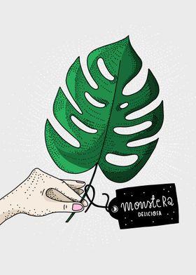 Monstera Deliciosa/botanical illustration by atogrzywa