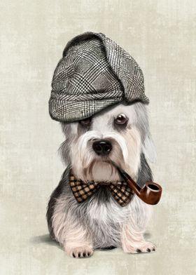 Mr Dandie Dinmont Terrier