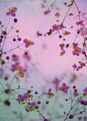 Color flowers photograph