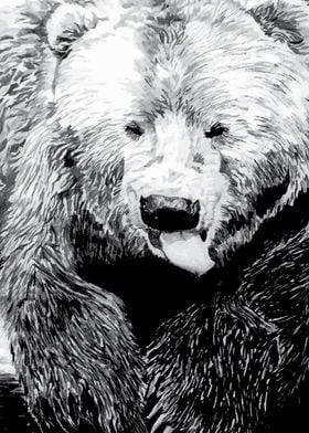 Drawing of a grizzly bear
