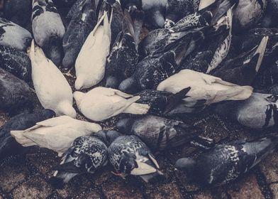 White doves in Gothenburg.
