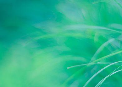 Tropical NO3