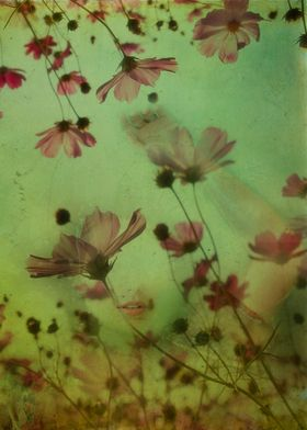 "Artistic photograph ""My soul is an imaginary garden"""