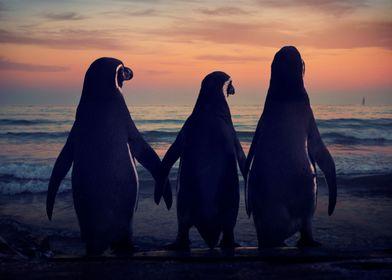 3 Penguins photo composite