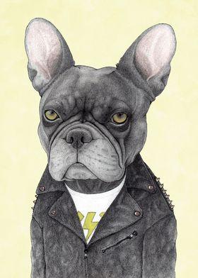 Hard Rock French Bulldog