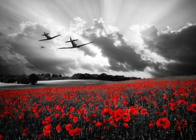 Spitfires over a poppy field