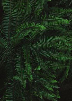 Beautiful Northwest Ferns