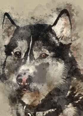 watercolor / wolf / paint