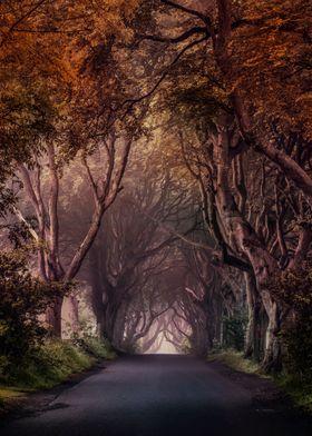 Autumn Alley in Northern Ireland