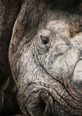 Rhinocero Hope