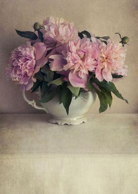 Fresh pink  peonies in a white flowerpot