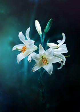 lilies under the light