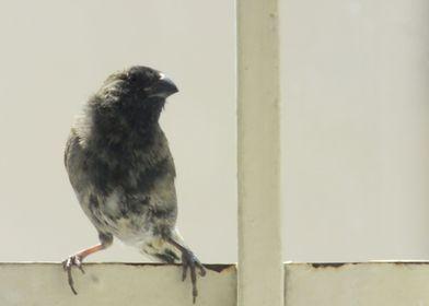 Little Bird Posing