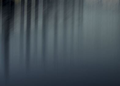 Lake or Forest