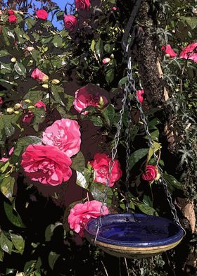 Rose and Bowl