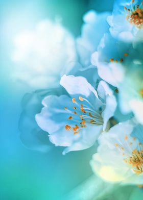 a sun kiss in a sakura