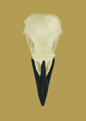 Raven Skull (Corvus corax)