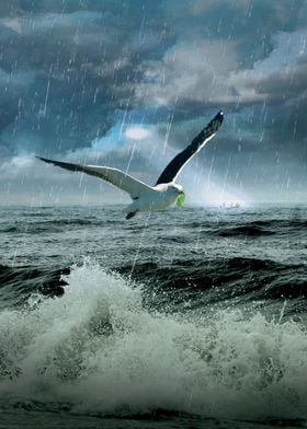 Bird of Hope I