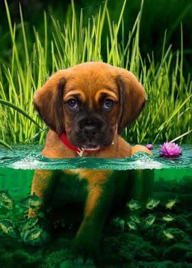 puppy in the water having fun with little fish