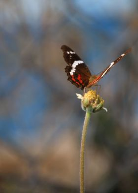 Black and Orange Butterfly atop flower