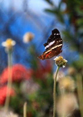 Butterfly alighting on flower