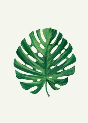Monstera - Leaf