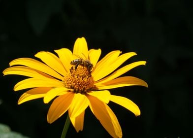 Spring and bee on the yellow flower