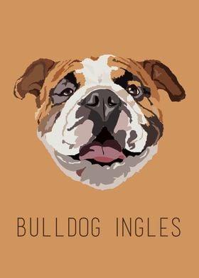 Bulldog ingles!