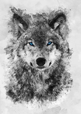 Grey Wolf Blue eyes