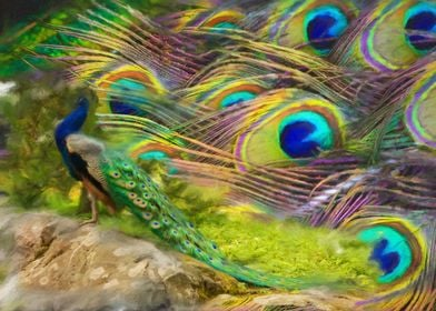 Colours of peacock
