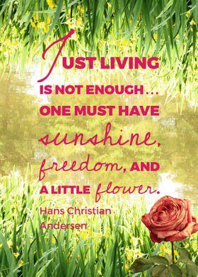 Sunshine, freedom, flower.