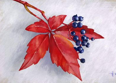 Red Leaf and Berries