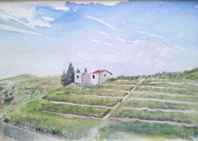 Vineyard Argeles sur Mer