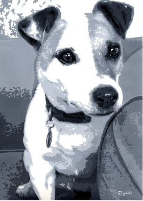 Paddy the Jack Russell