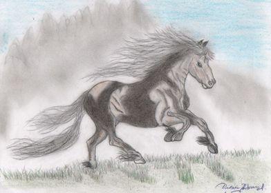 Horse and the prairie