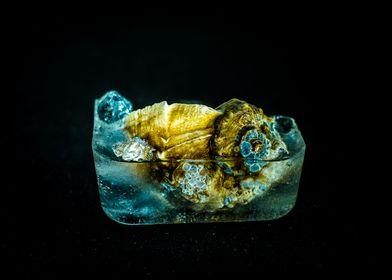 Frozen Seasnail