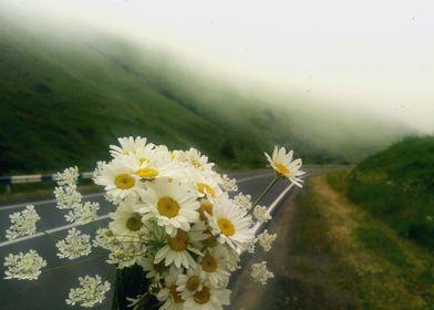Dandelions find their road