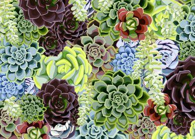 Succulent Love