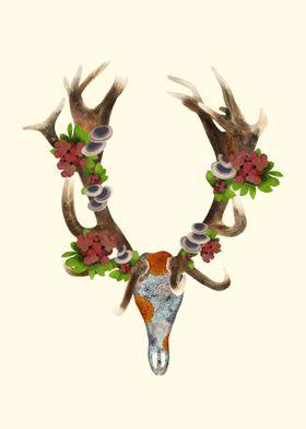 Lichen Red Deer Skull