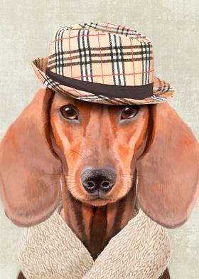 Mr Dachshund portrait