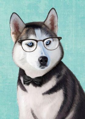 Mr Siberian Husky