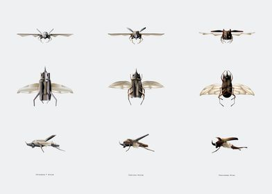 aircraft evolution phase 2