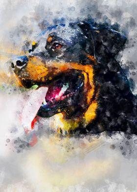 Roman the Rottweiler