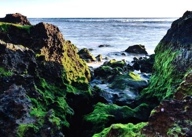 Algae Covered Rocks