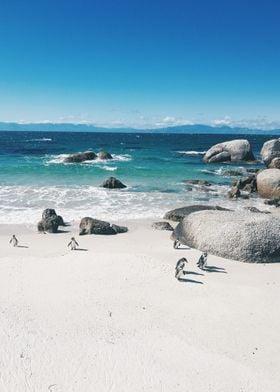 Cape Town Penguins