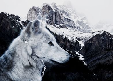 Wolf and Mountains