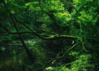 Eerie green wood
