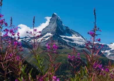 Matterhorn Zermatt Summer