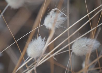 soft white nature