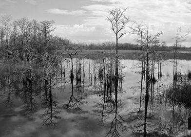 Everglade Reflections